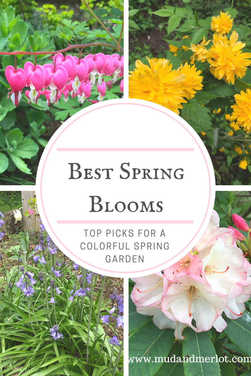 The Best And Easiest Spring Blooms Mud And Merlot